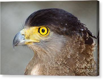 Canvas Print featuring the photograph Waiting For Prey  by Fotosas Photography