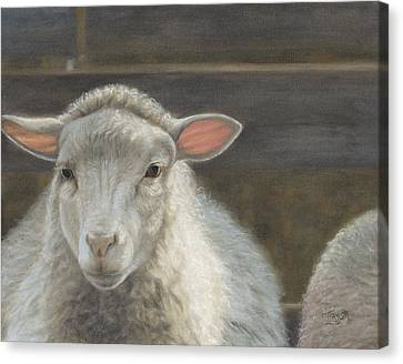 Waiting For The Shepherd Canvas Print