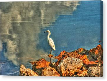 Waiting On Dinner Canvas Print by Greg and Chrystal Mimbs