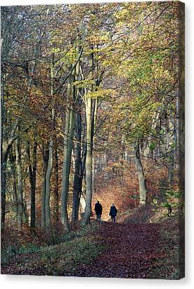 Walk In The Woods Canvas Print by Nicola Butt