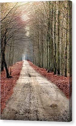 Walk Through Woods Canvas Print by JimPix