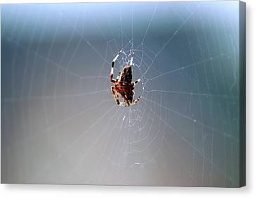 Walkin In A Spider Web Canvas Print by LeeAnn McLaneGoetz McLaneGoetzStudioLLCcom