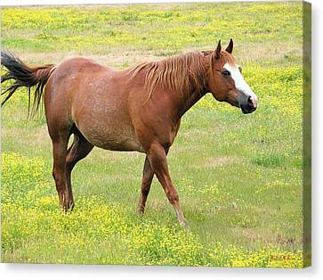 Canvas Print featuring the photograph Walking Horse by Wendy McKennon