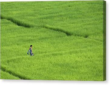 Walking In Green Rice Fields Near Mae Hong Son Canvas Print by Austin Bush