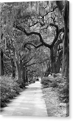 Walking Through The Park In Black And White Canvas Print by Suzanne Gaff