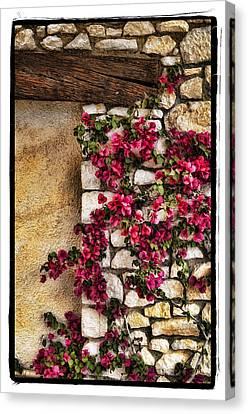 Wall Beauty Canvas Print by Mauro Celotti
