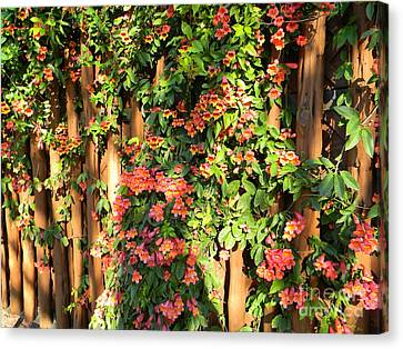 Wall Of Beauty Canvas Print