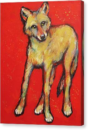 Wary Coyote Canvas Print by Carol Suzanne Niebuhr