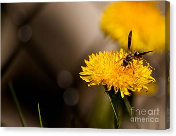 Wasp And Flower  Canvas Print