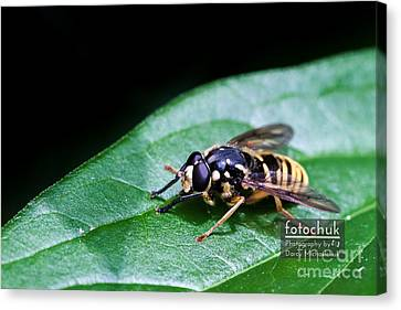 Wasp Break Canvas Print by Darcy Michaelchuk