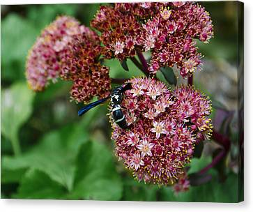 Wasp  Canvas Print
