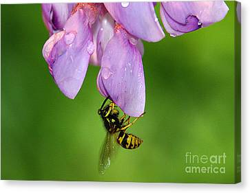 Wasp N Bloom Canvas Print