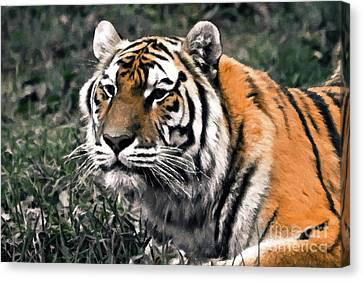 Watchful Bengal Tiger - Brush Stroke Canvas Print by Darcy Michaelchuk