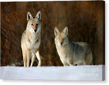 Canvas Print featuring the photograph Watching by Mitch Shindelbower