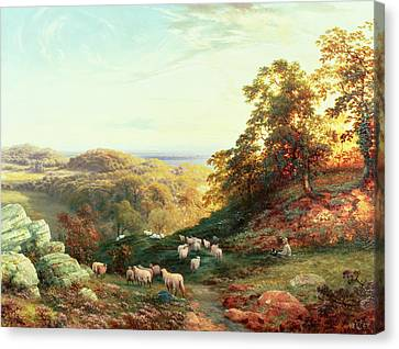Watching The Flock Canvas Print