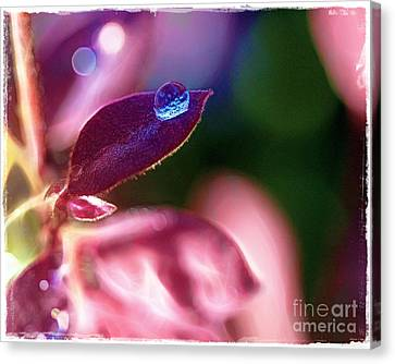 Water Drop Canvas Print by Judi Bagwell