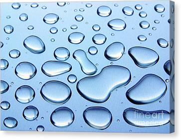 Water Drops Canvas Print by Carlos Caetano