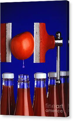 Water Extraction From Tomato Canvas Print by Photo Researchers