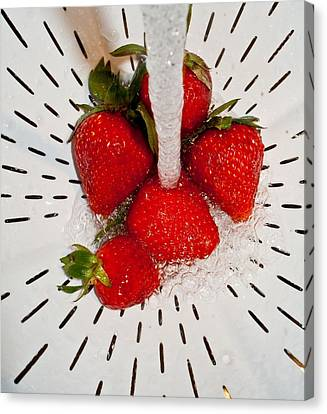 Canvas Print featuring the photograph Water For Strawberries by David Pantuso