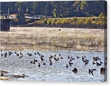 Water Fowl At Lake Wilhelmina Arkansas Canvas Print by Douglas Barnard