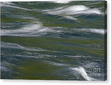 Water Impression 2 Canvas Print by Catherine Lau