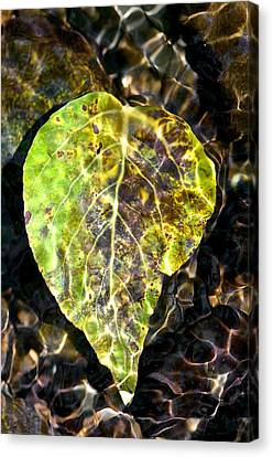 Canvas Print featuring the photograph Water Leaf by Scott Holmes