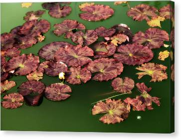 Water Lilies Canvas Print by Bonnie Bruno