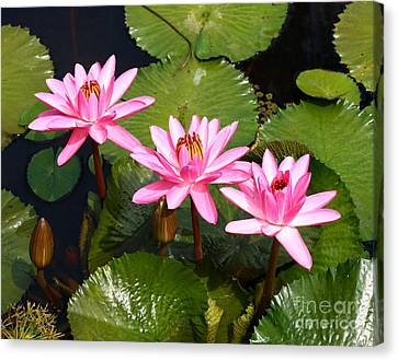 Canvas Print featuring the photograph Water Lilies. by Denise Pohl