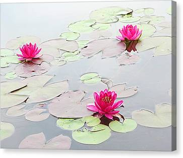 Water Lilies In The Morning Canvas Print by Michael Taggart