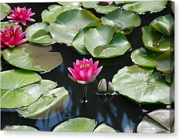 Canvas Print featuring the photograph Water Lilies by Jennifer Ancker