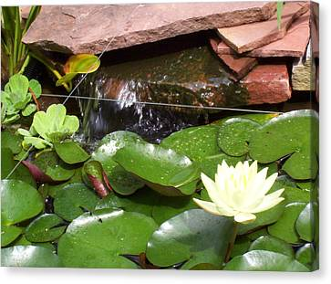 Canvas Print featuring the photograph Water Lillies by Richard Willows