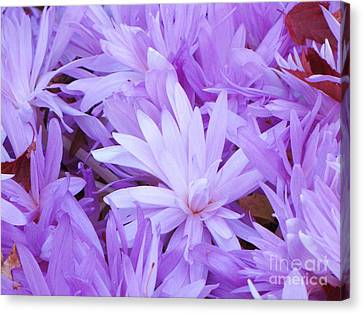 Canvas Print featuring the photograph Water Lilly Crocus by Michele Penner