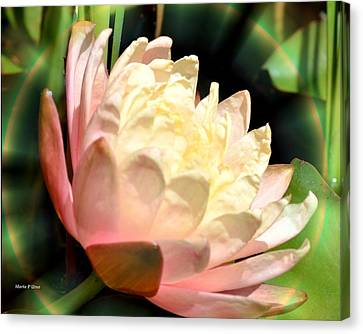 Water Lilly In Bloom Canvas Print by Maria Urso