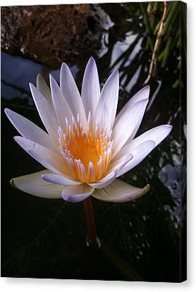 Canvas Print featuring the photograph Water Lily by Carol Sweetwood