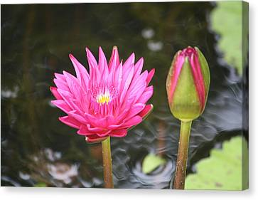 Canvas Print featuring the photograph Water Lily by Donna  Smith