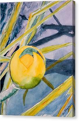 Water Lily Habitat Canvas Print by Warren Thompson