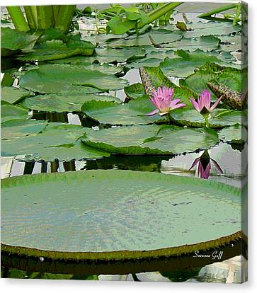Water Lily Land IIi Canvas Print