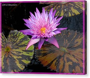 Water Lily Magic Canvas Print by M C Sturman