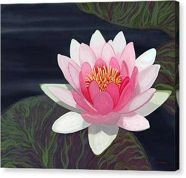 Water Lily Canvas Print by Tim Stringer