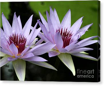 Florida Flowers Canvas Print - Water Lily Twins by Sabrina L Ryan