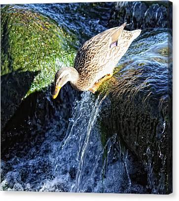 Water Slide Canvas Print by Linda Dunn