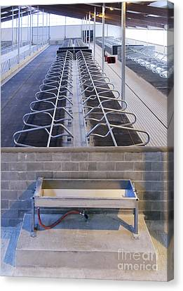 Water Trough And Cattle Cubicles Canvas Print