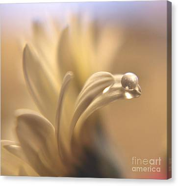Waterbead Canvas Print by Wendy Riley- Athans
