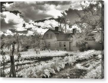 Watercolor In Black And White Canvas Print by Joann Vitali