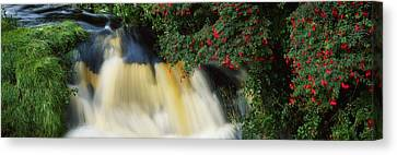 Waterfall And Fuschia, Ireland Canvas Print by The Irish Image Collection