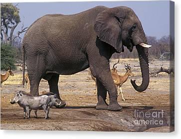 Canvas Print featuring the photograph Watering Hole - Savuti Marsh Botswana by Craig Lovell