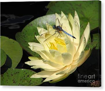 Waterlily With Dragonfly Canvas Print by Eva Kaufman