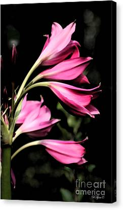 Wave Of Pink Canvas Print by Diana  Tyson