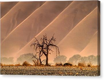 Wave Tree Canvas Print by Alistair Lyne