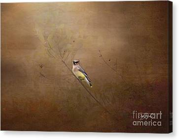 Waxwing Spring Visit Canvas Print by Cris Hayes